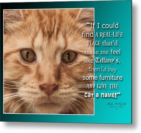 Cat Metal Print featuring the photograph Cat by Sandy Klewicki