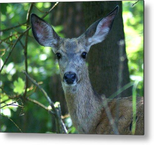 Spokane Metal Print featuring the photograph Deer In The Woods by Ben Upham III