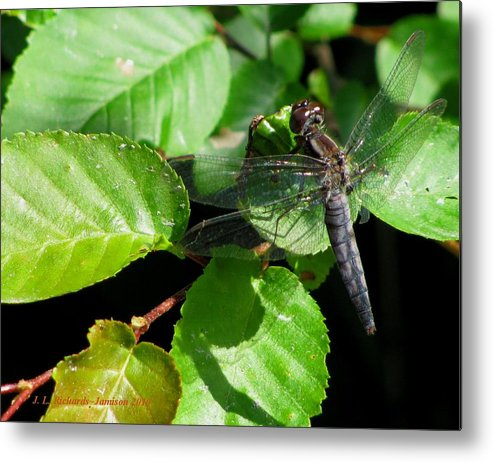 Dragonfly Metal Print featuring the photograph Dragonfly by Jennie Richards