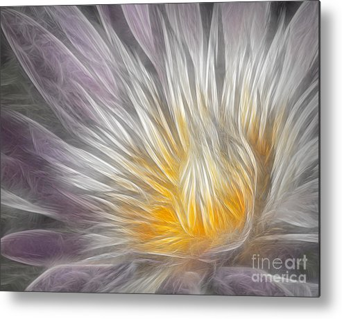 Waterlily Metal Print featuring the photograph Dreamy Waterlily by Susan Candelario