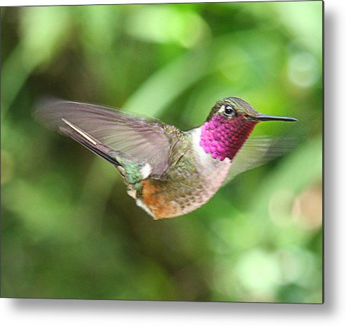 Metal Print featuring the photograph From Hal's Garden 01 by Hal Taub