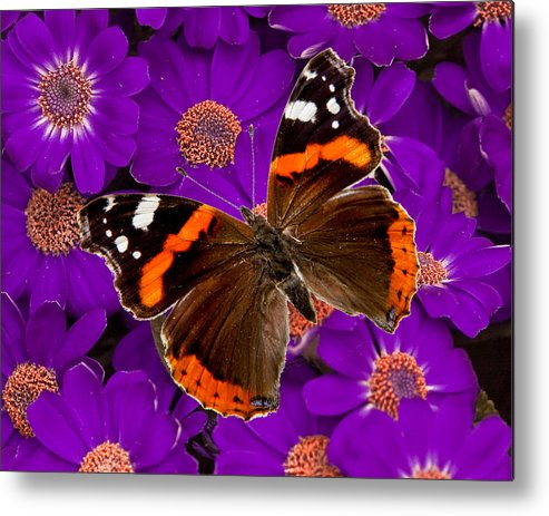 Metal Print featuring the photograph From Hal's Garden 05 by Hal Taub