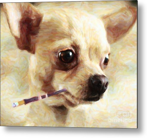 Animal Metal Print featuring the photograph Hollywood Fifi Chika Chihuahua - Painterly by Wingsdomain Art and Photography