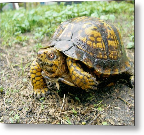 Turtle Metal Print featuring the photograph In A Minute by Richard Brooks