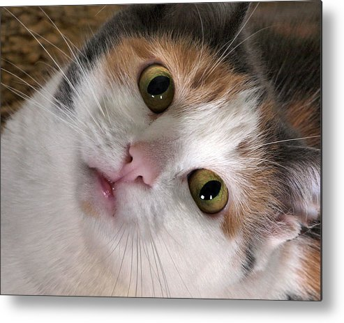 Cat Metal Print featuring the photograph Isabella by Camille Lopez