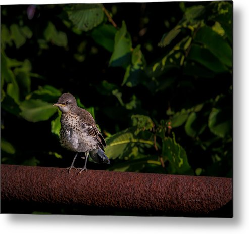 Bird Metal Print featuring the photograph Just Out Of The Nest by Donna Lee