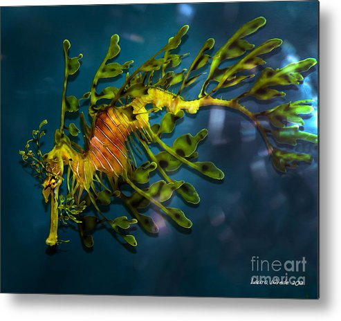 Leafy Sea Dragon Metal Print featuring the photograph Leafy Sea Dragon by Artist and Photographer Laura Wrede