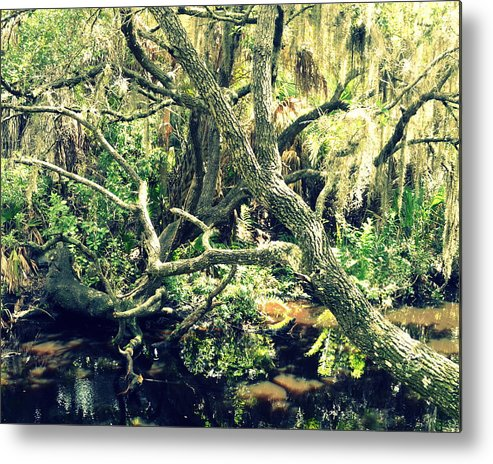 Tree Metal Print featuring the photograph Leaning Branches by Diana Berkofsky