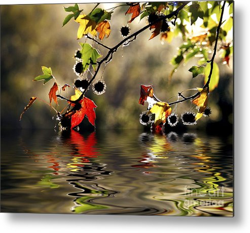 Liquidambar Maple Autumn Fall Flood Water Reflection Metal Print featuring the photograph Liquidambar In Flood by Sheila Smart Fine Art Photography