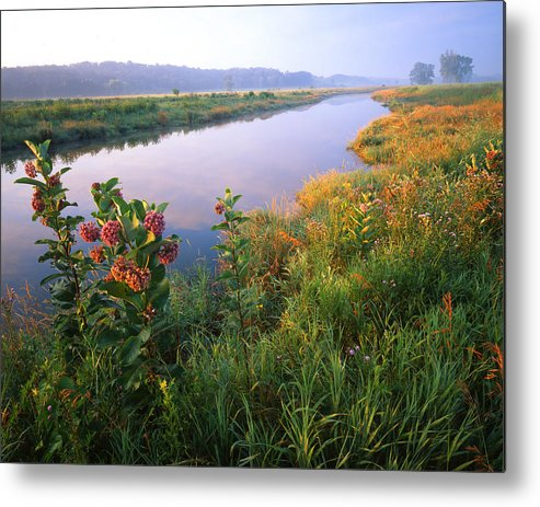Sunset Metal Print featuring the photograph Milk Weed Morning by Ray Mathis