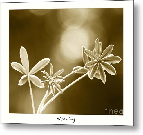 Vintage Art Metal Print featuring the photograph Morning by Artist and Photographer Laura Wrede