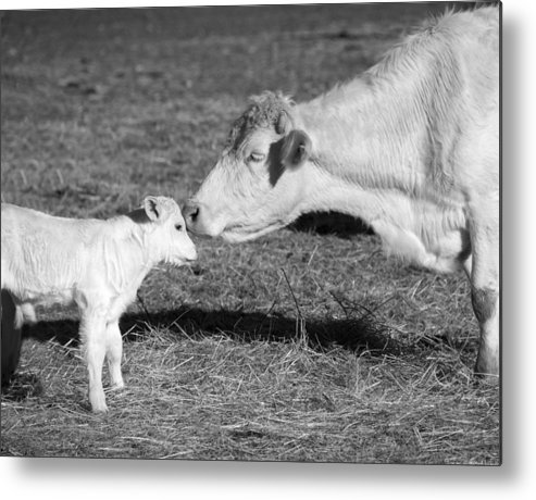 Barnyard Metal Print featuring the photograph Mother And Child by Steven Michael