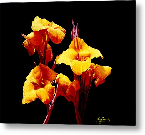 Yellow Cannas Metal Print featuring the painting Orange Cannas by Gary Hernandez