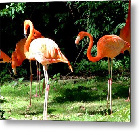 Bird Metal Print featuring the photograph Orange Flamingo by Kingsuk Mukherji