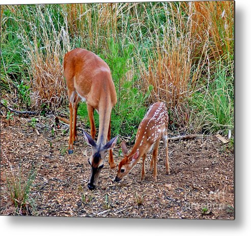 Deer Metal Print featuring the photograph Piney Mountain Doe And Fawn by Jeff McJunkin