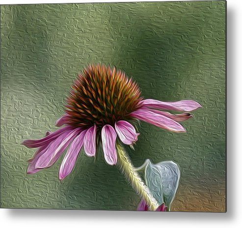 Flower Metal Print featuring the photograph Purple Coneflower by Nathan Harker
