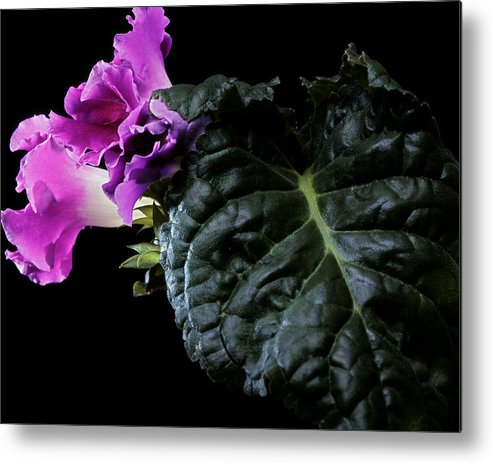 Flower Metal Print featuring the photograph Purple Plant by Photophilous