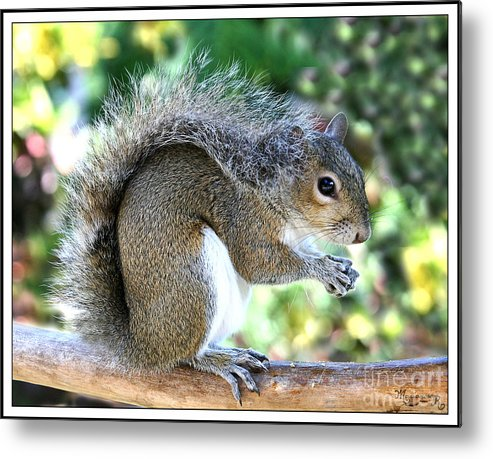 Squirrel Metal Print featuring the photograph Relaxed by Mariarosa Rockefeller