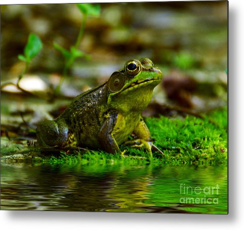 Frog Metal Print featuring the photograph Resting In The Shade by Kathy Baccari