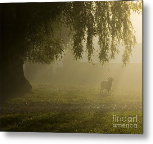 Goat Metal Print featuring the photograph Smelly Goat In The Mist by Jerry McElroy