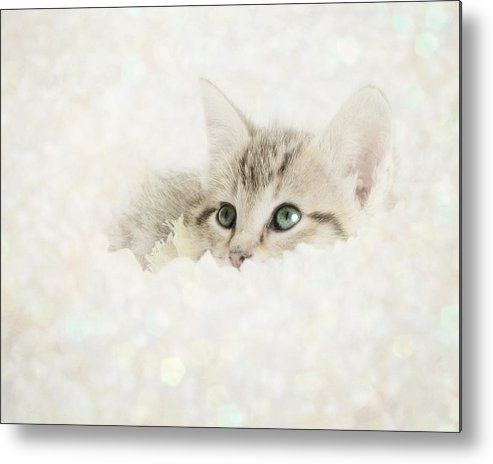 Kitten Metal Print featuring the photograph Snow Baby by Amy Tyler