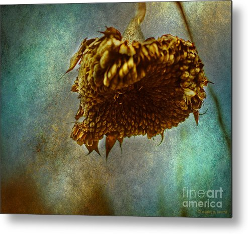Texture Metal Print featuring the photograph Sunflower Head by Coertje Feil