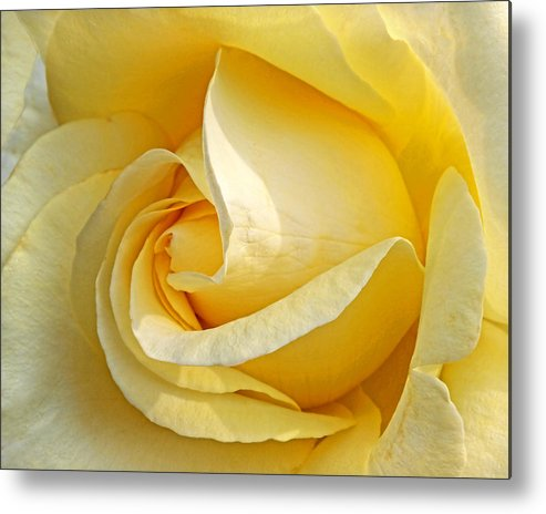 Rose Metal Print featuring the photograph Sunshine Rose by Gill Billington