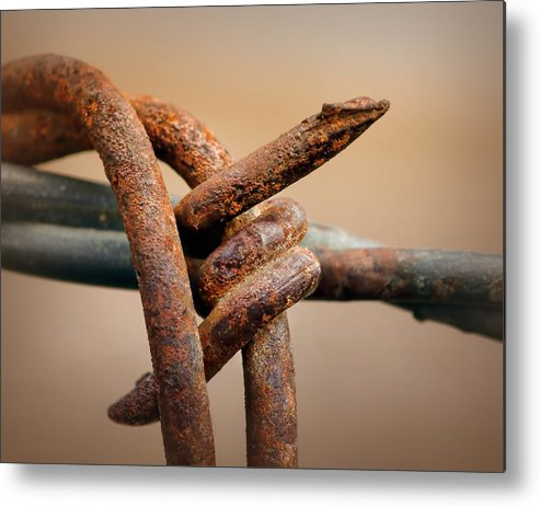 Barb Metal Print featuring the photograph To The Point by Nikolyn McDonald