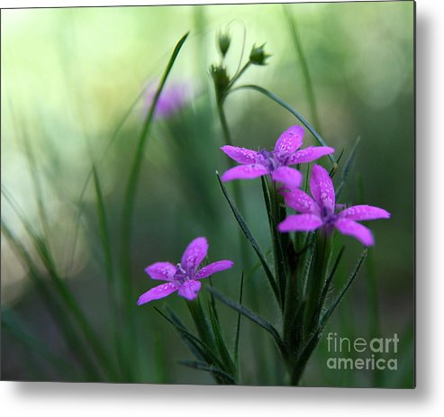 Purple Metal Print featuring the photograph Ultra Violet by Neal Eslinger