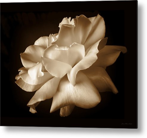 Rose Metal Print featuring the photograph Umber Rose Floral Petals by Jennie Marie Schell