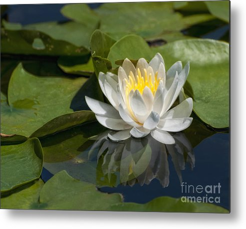 Water Lily Metal Print featuring the photograph Water Lily Reflection by Claudia Kuhn