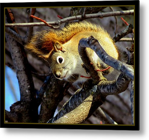Metal Print featuring the photograph What Are You Looking At by Marcus Moller