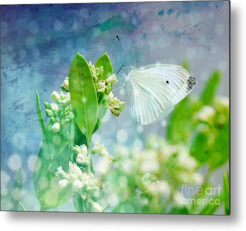White Metal Print featuring the photograph White Butterfly by Susan Turner