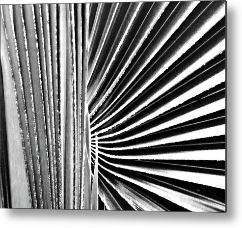 Palmetto Metal Print featuring the digital art Palmetto by Lizi Beard-Ward