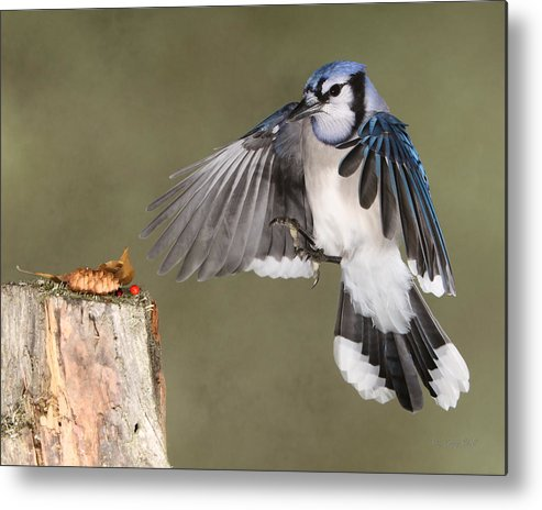 Nature Metal Print featuring the photograph All Mine by Gerry Sibell