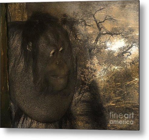 Arne J Hansen Metal Print featuring the photograph Arboreal Dreams by Arne Hansen