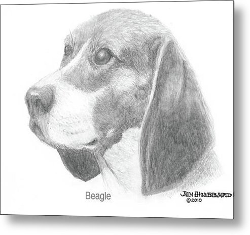 Dogs Metal Print featuring the drawing Beagle by Jim Hubbard