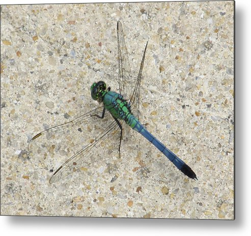 Dragonfly Metal Print featuring the photograph Blue Dragonfly by Michele Caporaso