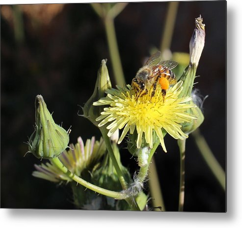 Floral Metal Print featuring the photograph Busy Bee by Kume Bryant