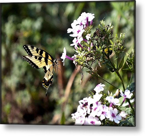 Nature Metal Print featuring the photograph Butterfly by Karl Voss