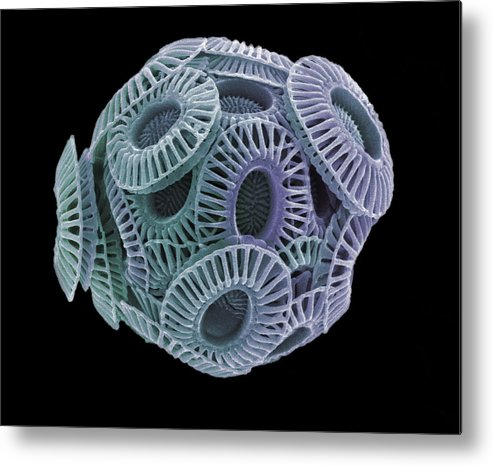 Emiliana Huxleyi Metal Print featuring the photograph Calcareous Phytoplankton, Sem by Steve Gschmeissner