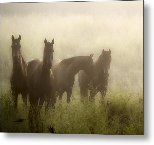 Horse Metal Print featuring the photograph Daughters Of The Mist II by Ron McGinnis