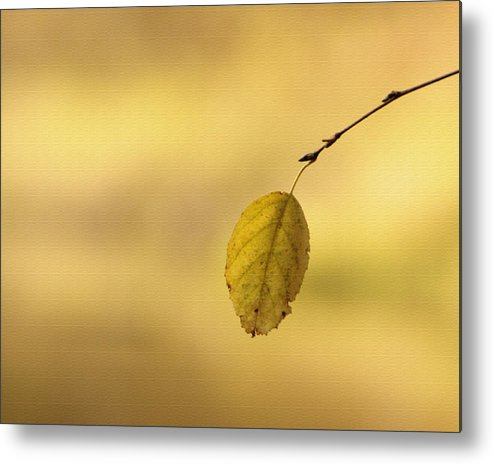 Metal Print featuring the photograph Golden Hue by Linda Helmick