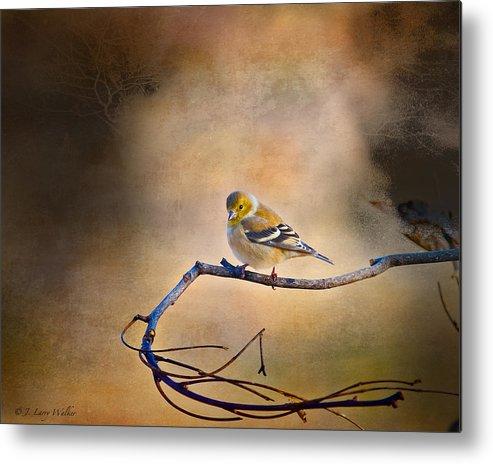 J Larry Walker Metal Print featuring the digital art Goldfinch In Deep Thought by J Larry Walker