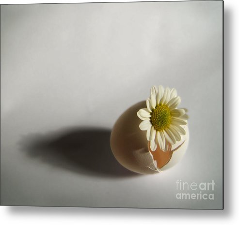 Artoffoxvox Metal Print featuring the photograph Hatching Flower Photograph by Kristen Fox