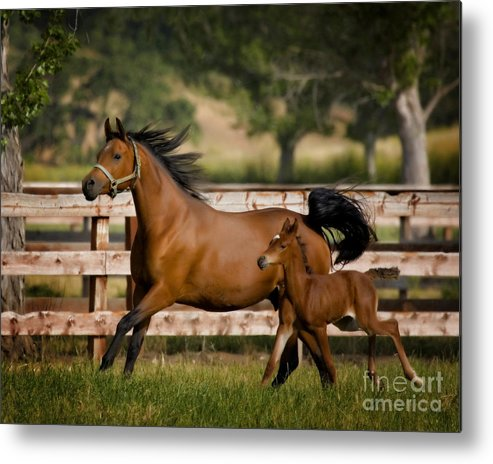 Equine Art Metal Print featuring the photograph Keeping Up by Patty Hallman