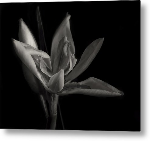 Black And White Metal Print featuring the photograph Lily by Mario Celzner