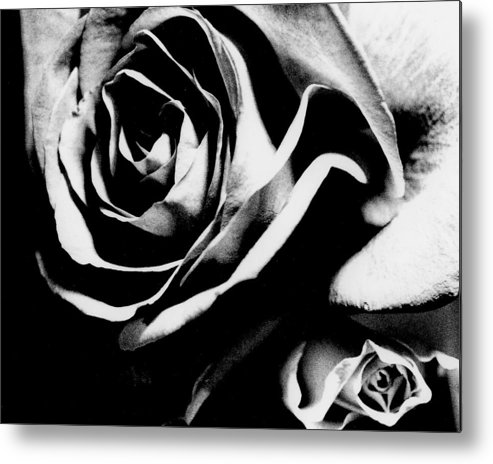Still Life Metal Print featuring the photograph Roses Study 1 by Lisa Spencer
