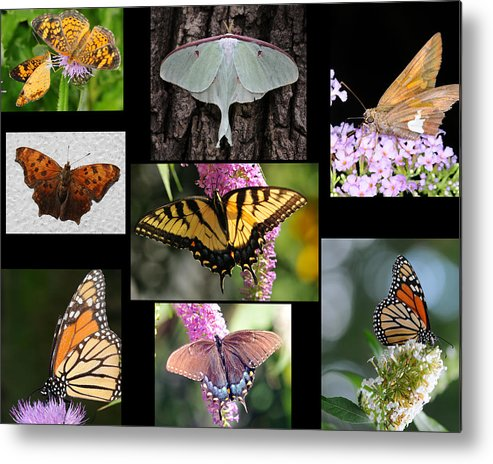 Butterfly Metal Print featuring the photograph The Butterfly Collection by Paul Ward