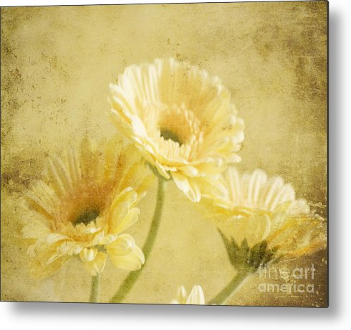 Gerber Metal Print featuring the photograph Vintage Vanilla by Traci Cottingham